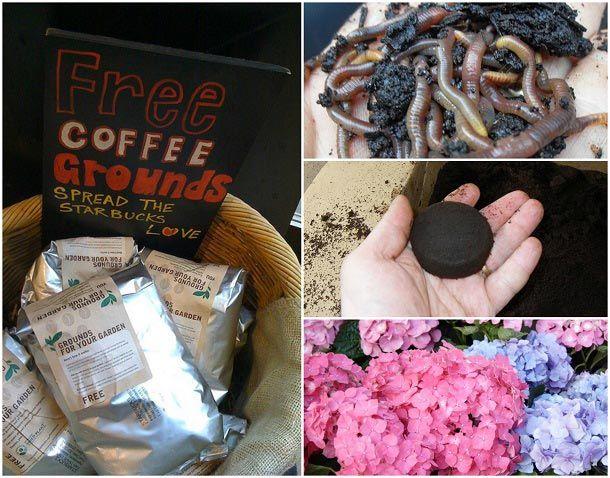 10 Formas del genio de usar café molido de edad en su jardín
