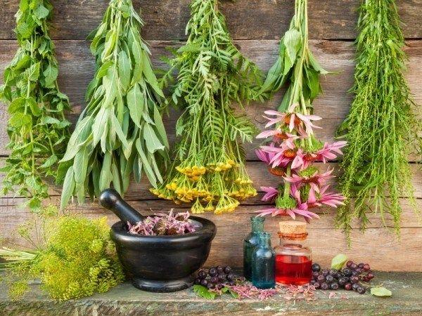 12 Hierbas curativas que necesitan para crecer en su jardín medicinal