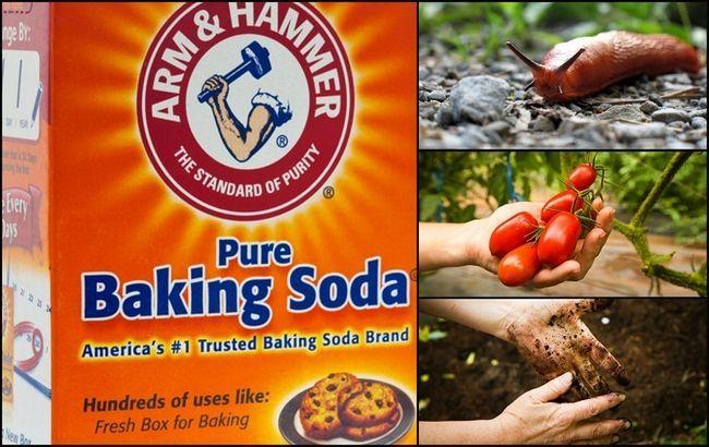 13 Mejores usos para el bicarbonato de sodio en el jardín