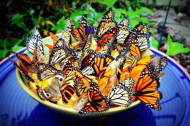 14 Hermosas alimentadores mariposa bricolaje para hacer de su jardín un paraíso mariposa
