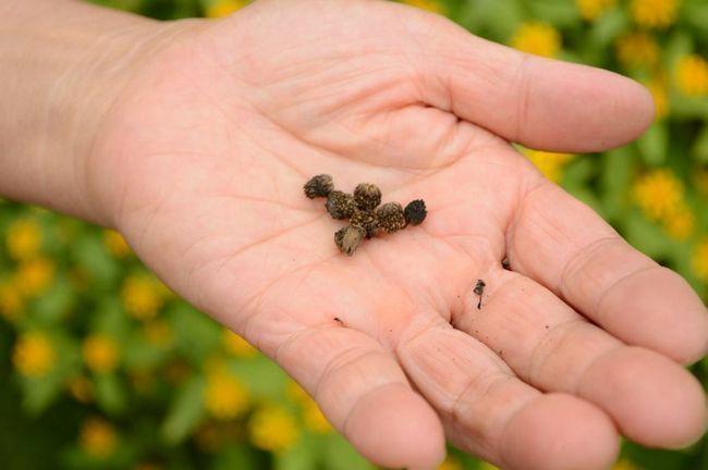 15 Secretos de partida de semillas avanzadas que no aprenderán en el centro de jardinería