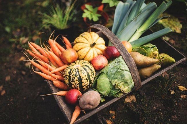 17 Secretos orgánicos a optimizar sus cosechas jardín