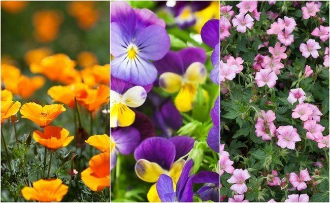 18 Flores más fácil y más bellas cualquiera puede crecer en su jardín