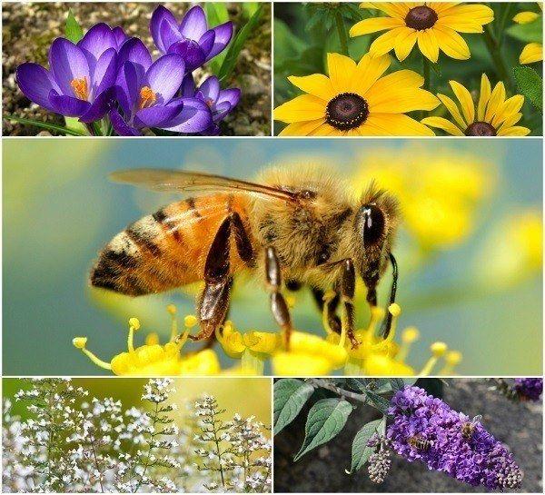 20 Las flores hermosas para atraer a las abejas para su jardín