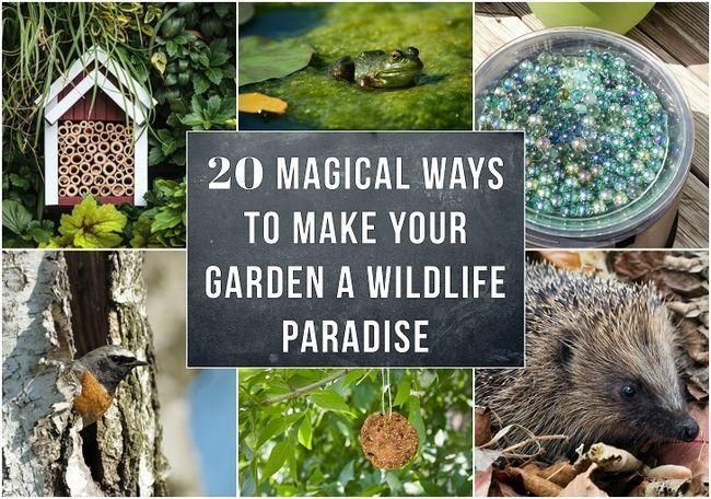 20 Maneras mágicas para hacer de su jardín un paraíso de vida silvestre