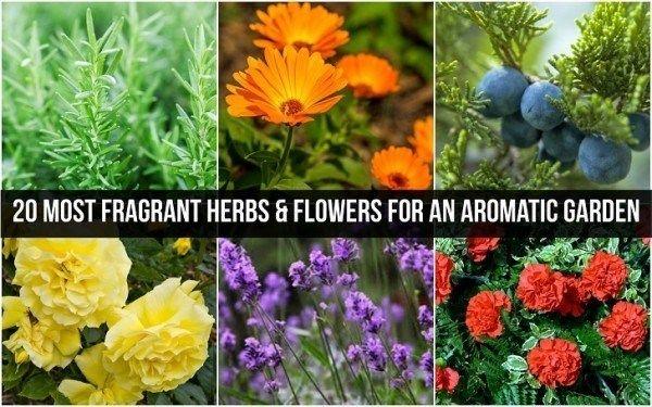 20 Hierbas más fragantes y flores para un jardín aromático