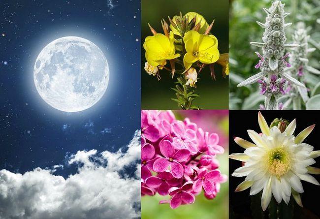 20 Plantas que crecen en su jardín luz de la luna