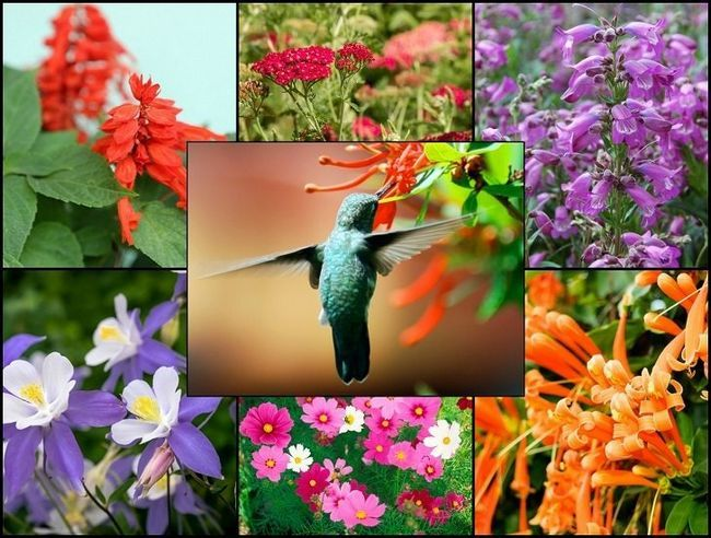 21 Plantas de jardín gloriosos que atraen a los colibríes