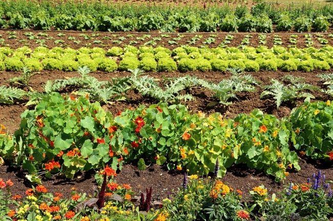 5 Trucos instantáneos para impulsar significativamente sus rendimientos jardín