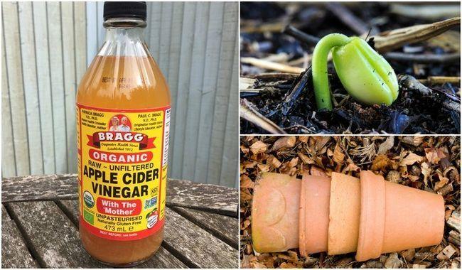 6 Usos brillantes para el vinagre de manzana en el jardín
