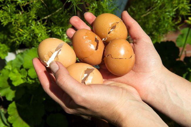 6 Razones convincentes que debe comenzar a usar las cáscaras de huevo en su jardín