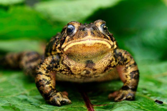9 Maneras de atraer a las ranas y sapos a su jardín