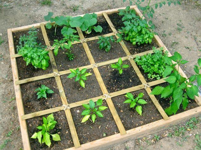 Cómo planificar una zona verde de pie de verduras - la forma más fácil de crecer abundantes verduras